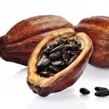 cacao-prah-3